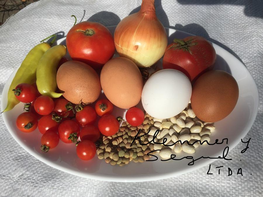 Huevos de la Granja El Condor de Chillan